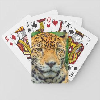 Close-up of a jaguar face, Belize Playing Cards