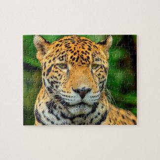 Close-up of a jaguar face, Belize Puzzles