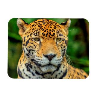 Close-up of a jaguar face, Belize Rectangular Photo Magnet