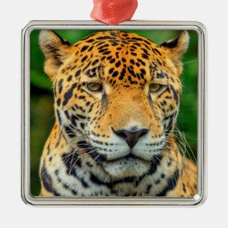 Close-up of a jaguar face, Belize Silver-Colored Square Ornament