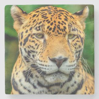 Close-up of a jaguar face, Belize Stone Beverage Coaster