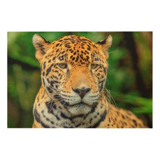 Close-up of a jaguar face, Belize Wood Canvases