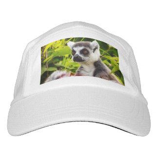 close-up of a lemur  madagascar on performance hat