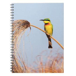 Close-up of a little bee-eater bird spiral note books