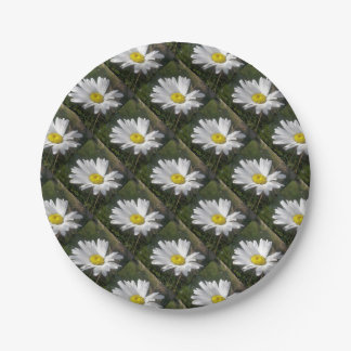 Close Up of a Marguerite Daisy Flower Paper Plate