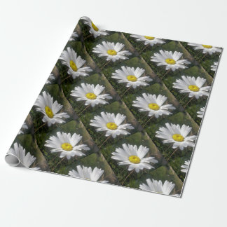 Close Up of a Marguerite Daisy Flower Wrapping Paper
