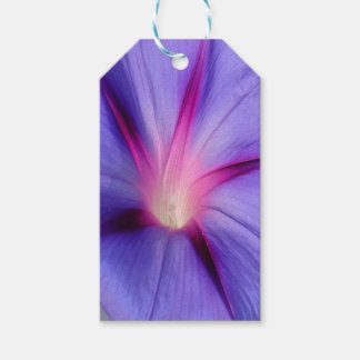 Close Up of A Morning Glory Purple and Pink Flower Gift Tags