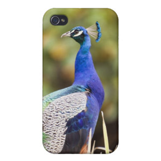Close-up of a peacock cases for iPhone 4