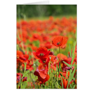 Close-up of a Poppy field, France Card