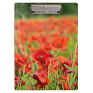 Close-up of a Poppy field, France Clipboard