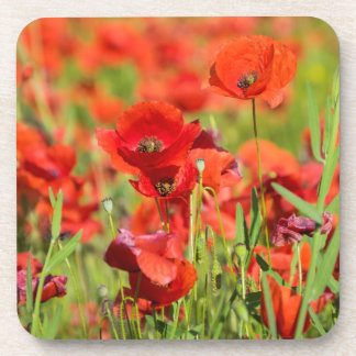 Close-up of a Poppy field, France Drink Coaster