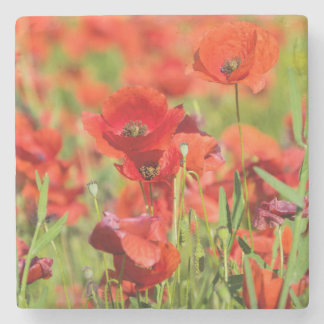 Close-up of a Poppy field, France Stone Beverage Coaster