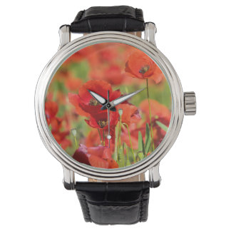 Close-up of a Poppy field, France Watch