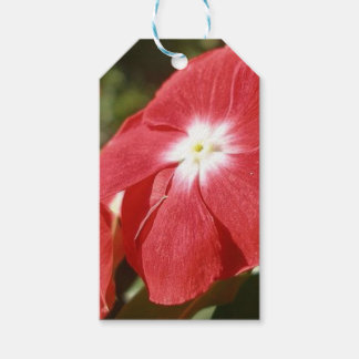 Close Up Of A Red Busy Lizzie Flower Pack Of Gift Tags