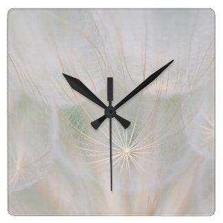 Close up of a seed head, Canada Clocks