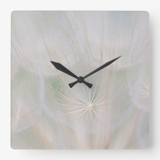 Close up of a seed head, Canada Square Wall Clock