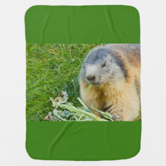 close-up of a sociable marmot on Baby Blanket