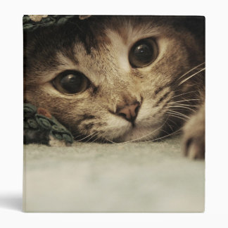 Close up of a tabby cats eyes 3 ring binders