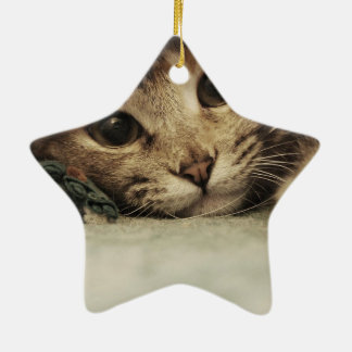 Close up of a tabby cats eyes ceramic star ornament