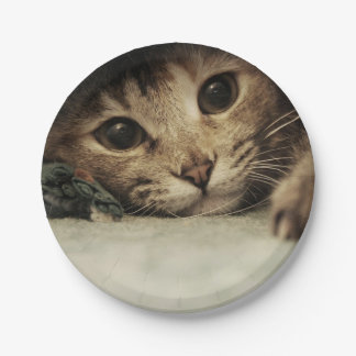 Close up of a tabby cats eyes paper plate