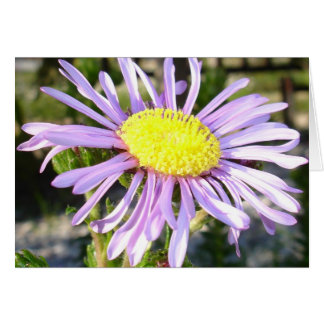 Close Up of A Violet Aster Flower Spring Bloom Card