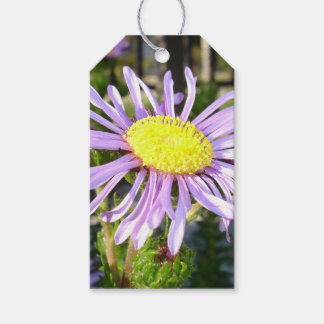 Close Up of A Violet Aster Flower Spring Bloom Gift Tags