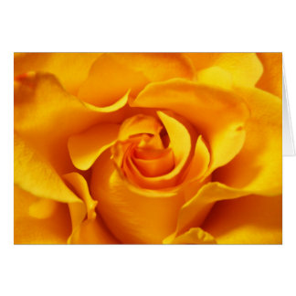 Close Up of a Yellow Rose Card