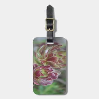 Close Up Of Aeonium Succulent With Garden Backgrou Luggage Tag