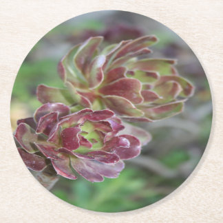 Close Up Of Aeonium Succulent With Garden Backgrou Round Paper Coaster