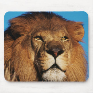 Close-up of African Lion Mouse Pad