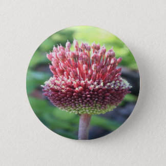 Close Up of An Ornamental Onion or Drumstick Alliu 2 Inch Round Button