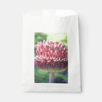 Close Up of An Ornamental Onion or Drumstick Alliu Favour Bag