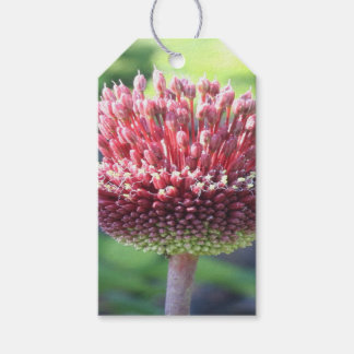 Close Up of An Ornamental Onion or Drumstick Alliu Pack Of Gift Tags