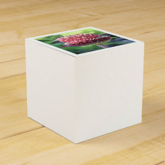 Close Up of An Ornamental Onion or Drumstick Alliu Party Favor Box