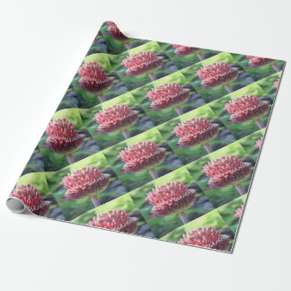 Close Up of An Ornamental Onion or Drumstick Alliu Wrapping Paper