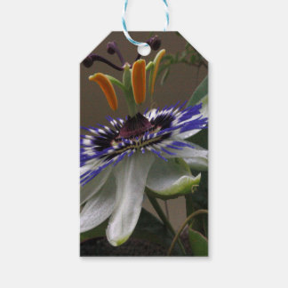 Close Up of Beautiful Passiflora Flower Pack Of Gift Tags