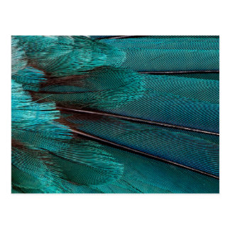 Close up of blue wing feathers postcard