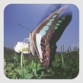 Close-up of butterfly on flower, flapping wings square sticker