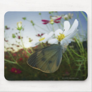 Close-up of butterfly on flower mouse pad