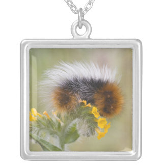 Close-up of caterpillar on flower. Credit as: Silver Plated Necklace