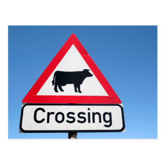 Close-Up Of Cattle Crossing Sign. Western Cape Postcard