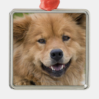 Close up of chow mix dog outdoors. metal ornament