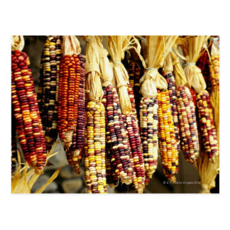 Close-up of colorful Indian corn in shop in Postcard