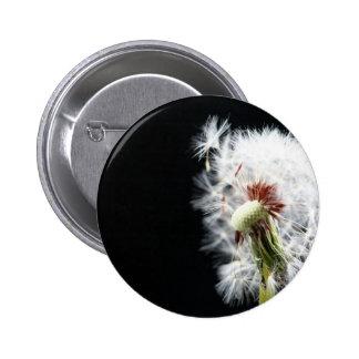 close up of Dandelion Pins