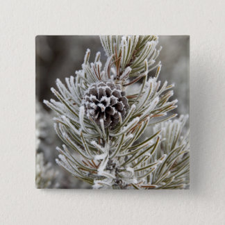 Close-up of frozen pine cone, Yellowstone 2 Inch Square Button
