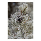 Close-up of frozen pine cone, Yellowstone Poster