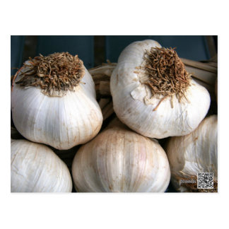 Close up of Garlic Bulb Postcard