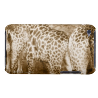 Close-Up of Giraffes Kruger National Park South iPod Touch Cover