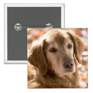 Close up of golden labrador retriever dog 2 inch square button