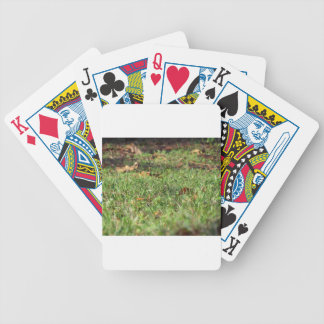 Close up of green grass field and autumn leaves bicycle playing cards
